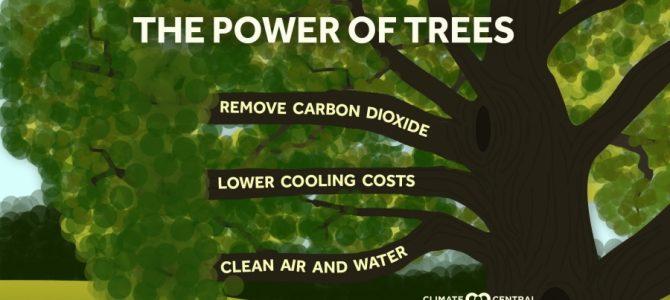 Nepaprastoji aplinkos ir klimato kaitos padėtis: medžiai gali mus išgelbėti
